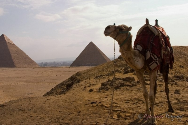 Camel on the Giza || Canon10D/EF28-135@28 | 1/180s | f11 | ISO100 | Handheld